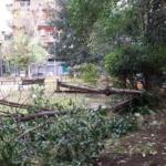 Rosati(Lega) VIII Municipio inerme davanti alla caduta degli alberi