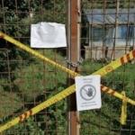 Sgombero serre abusive a Villa Panphili