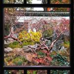 Shanghai: il Giardino del Mandarino Yu, armonia metropolitana