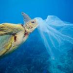 """L'Unione Europea mette al bando i prodotti in plastica monouso. Greenpeace """"Bene ma serve di più"""""""