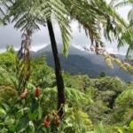 Clima,Greenpeace: proteggere le foreste e riformare il siatema Agroalimentare