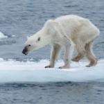 Clima, Greenpeace: il rapporto PCC conferma gravi impatti anche sugli oceani