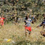 Allarme FAO: il Corno d'Africa vive l'invasione di locuste più grave degli ultimi 25 anni, colpa del clima