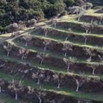 Progetti rieducativi sull'isola carcere di Gorgona
