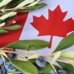 Canadian Awards 2021: è canadese il premio più ambito dai produttori mondiali di olio d'oliva