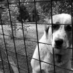 Come i crimini contro gli animali finanziano terrorismo e criminalità organizzata